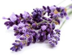 Lavendel is een van de ingrediënten in Reverta eczeemcrème