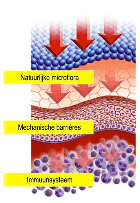 Een andere oorzaak van rosacea is een verzwakte huidbarrière. Hierdoor krijgen ziekteverwekkers, hitte, kou, vuil en andere rosacea-triggers meer kans om opvlammingen te veroorzaken